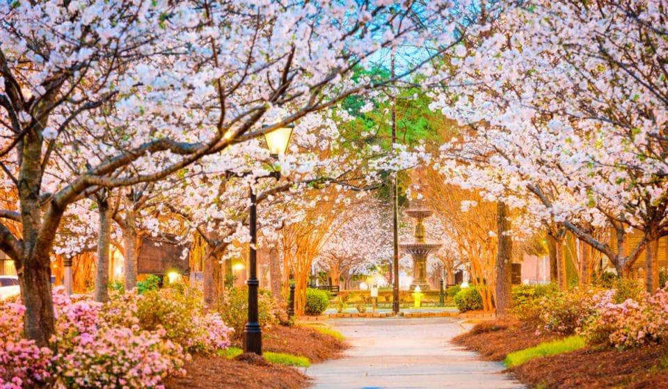 International Cherry Blossom Festival Returns To Magically Transform Macon This Spring