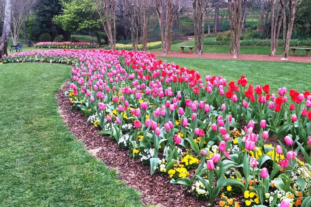 Thousands Of Tulips Take Over Gibbs Gardens With Spring Festival In Full Bloom