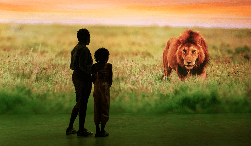 Journey Into The Wild At This Incredible Safari Experience In Atlanta