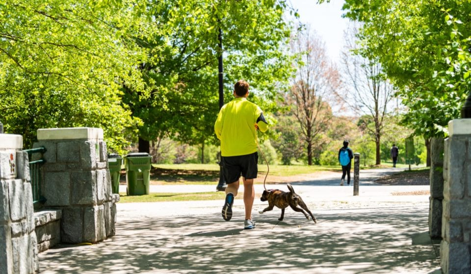 6 Incredible Dog Parks In Atlanta, Perfect For Every ATL Pooch!