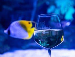 Georgia Aquarium Are Hosting This Swanky Wine Tasting Extravaganza