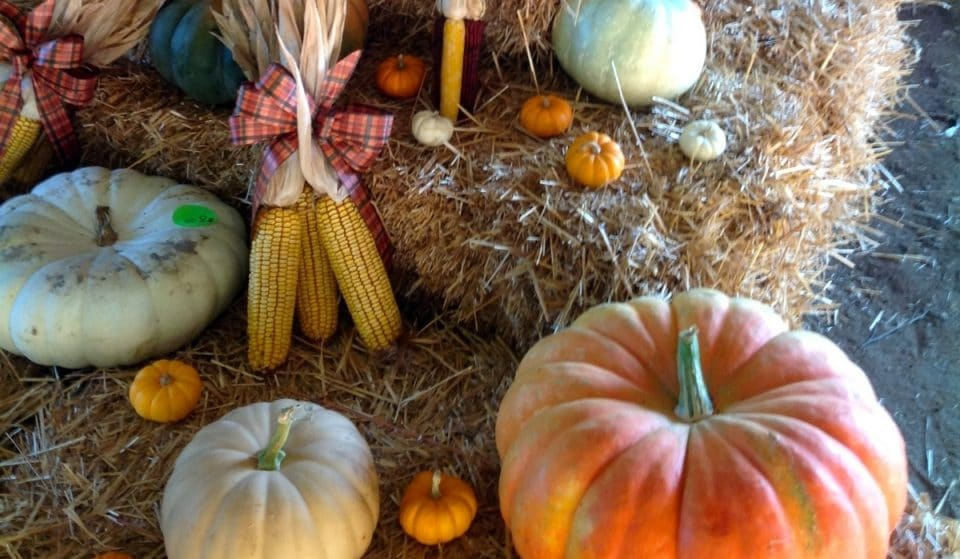 Awesome Pumpkin Patch & Corn Maze To Take Over Mitcham Farm This Fall