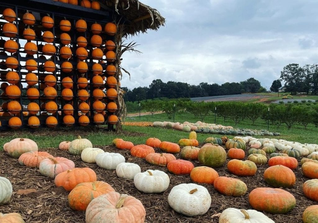 10 Places To Go Pumpkin Picking In And Around Atlanta This Fall