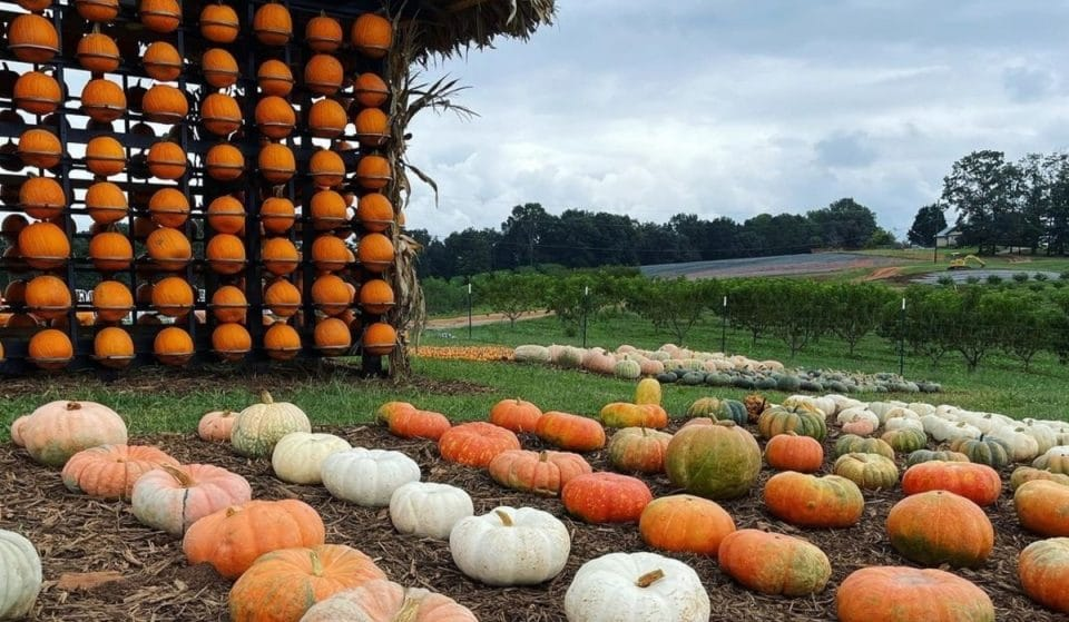 9 Places To Go Pumpkin Picking In And Around Atlanta This Fall